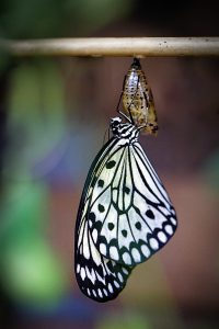 butterfly, hatch, macro